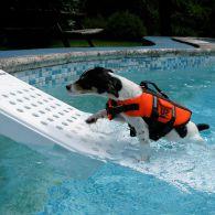 rampe piscine pour chien